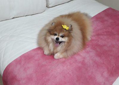 Princesa Floratta