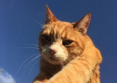 Querido Garfield